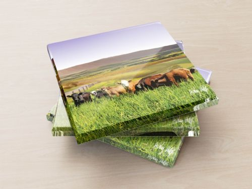 Rolling Hills With Cows Purple - Glass Coasters